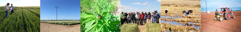 Agrupación de Tratamientos Integrados para la Agricultura