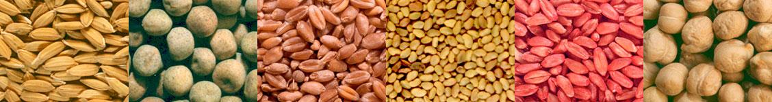 Suministros de semillas cosecha propia